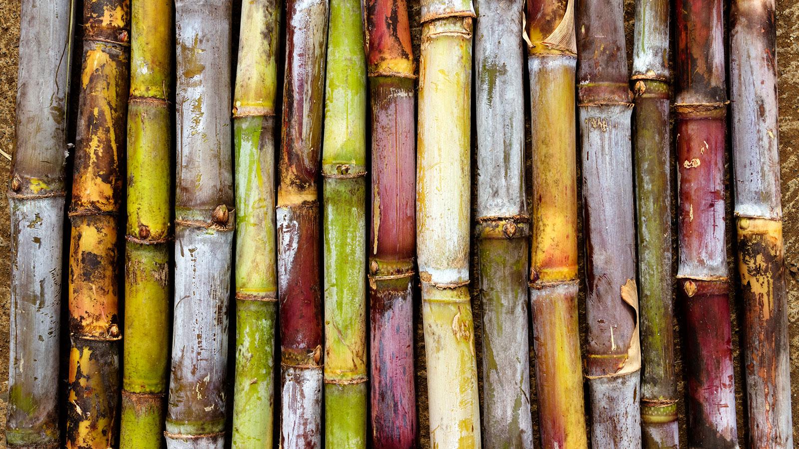 Sony desenvolve embalagem de bambu, cana-de-açúcar e papel